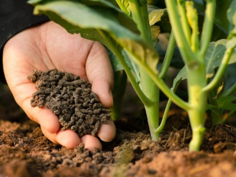 Análise de Fertilizante Laudo Itaparica - Análise Fertilizante