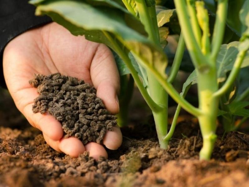 Análises de Fertilizantes Mapa Estreito - Análise Fertilizante