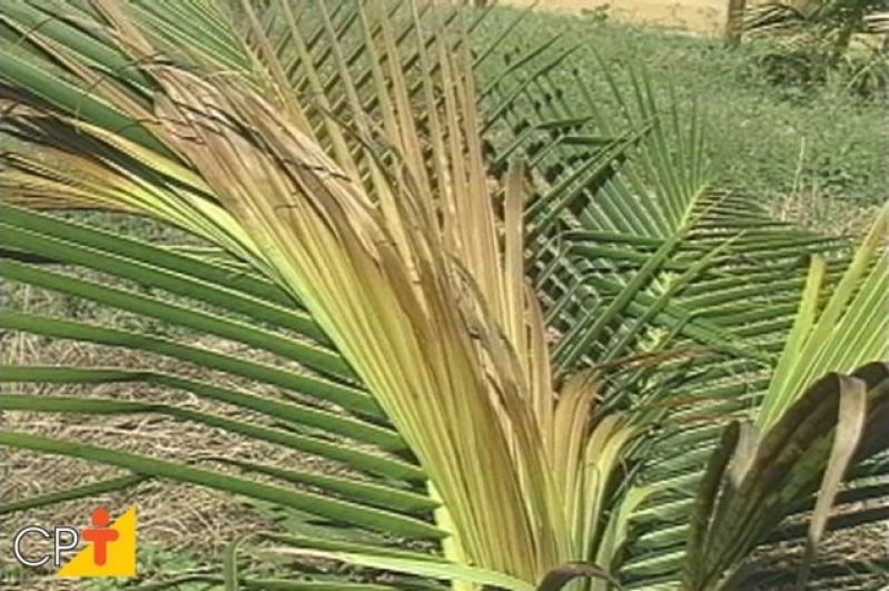 Análises Foliar do Coqueiro Riachão das Neves - Análise Foliar do Feijoeiro