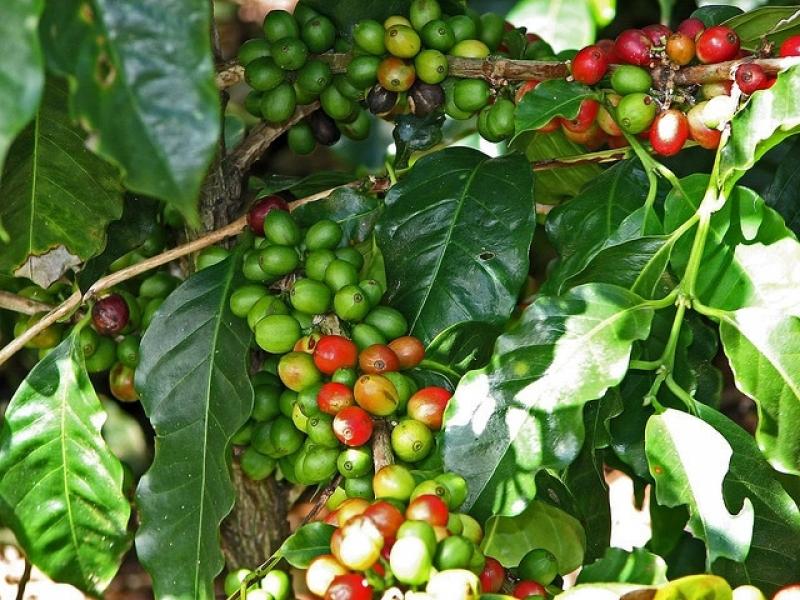 Serviço de Análise Foliar de Cafe Petrolina - Análise Foliar Laranja