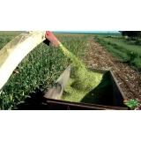 análise bromatológica do milho São Desidério