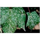 análise foliar algodão orçar Cavalcante