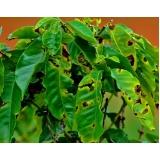 análise foliar de cafe orçar Dianópolis