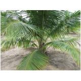 análise foliar do coqueiro Palmas