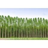 análise foliar eucalipto valor Maranhão