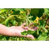 análise foliar na soja valor Gurupi