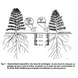análises física do solo Goianésia