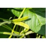análise foliar na soja