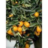 análises foliar laranja Januária