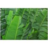 empresa de análise foliar banana Distrito Federal