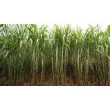 empresa de análise foliar em cana de açúcar Ponte Alta do Tocantins