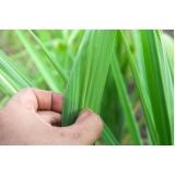 empresa para análise foliar em cana de açúcar Abadiânia