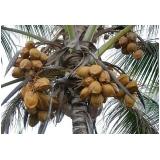 empresa que faz análise foliar do coqueiro Palmeirópolis