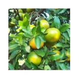 empresa que faz análise foliar laranja Posse