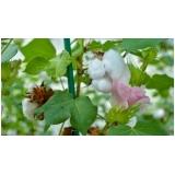 serviço de análise foliar algodão Formosa do Rio Preto