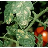 serviço de análise foliar batata Gilbués