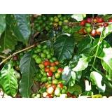 serviço de análise foliar de cafe Alvorada
