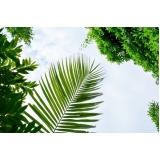 serviço de análise foliar do coqueiro Riachão